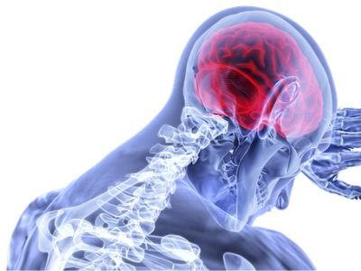 brain head nervous system